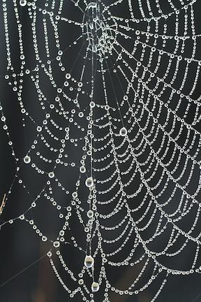 spider-web1a