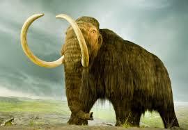 Mammoth 1