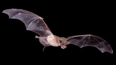 Bat 1 web